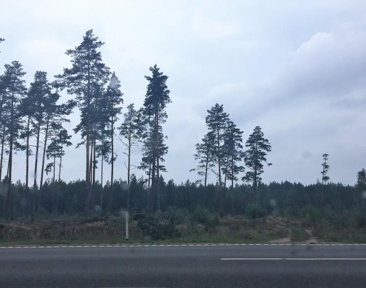 """Socialdemokratai: """"žaliojo"""" ministro priemonės imituoja miškų kirtimų draudimą"""