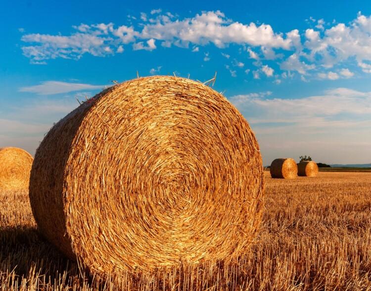 Tvarus žemės ūkio sektorius Lietuvoje – misija įmanoma